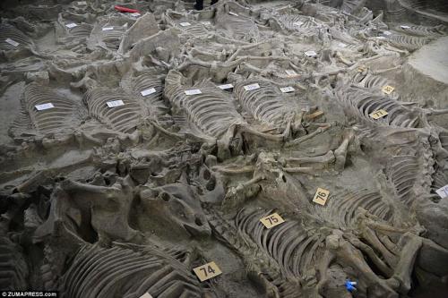 สุสานจีน หลายพันปี_zheng4