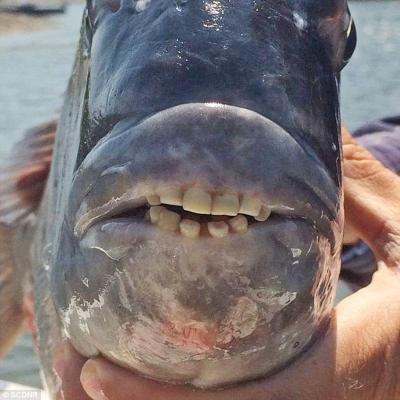 ปลา ฟัน เหมือน คน_fishteeth2